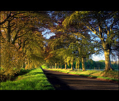 Copper Beech Avenue (angus clyne) Tags: road trees forest scotland spring path perthshire scone avenue hdr copperbeech sconepalace flikcr beechtrees platinumphoto colorphotoaward stormontfield notthatredyet nicedawntoday butdidntpapit