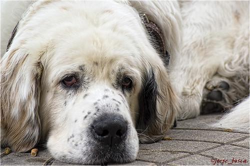 Blanca, perra urbana.