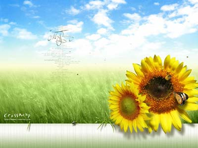 http:/ackgrounds.crossmap.com/wallpaper/sunflower-summer/205.htm