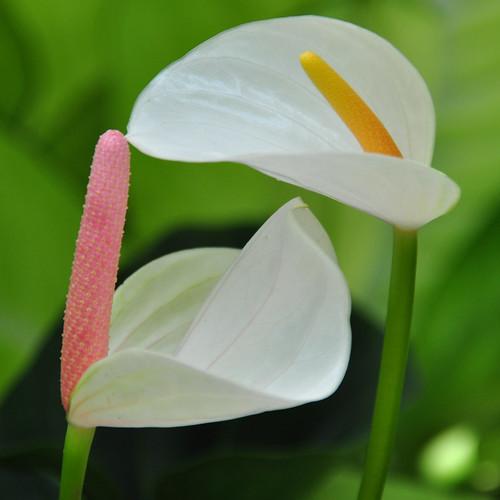 Botanical Garden 125_edited-1