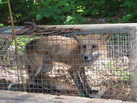 Fox_May312009_0002web