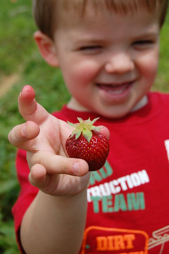 Harrison Picking Strawberries
