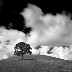 Tree (Gary Newman) Tags: longexposure bw tree hill somerset nd110 d700