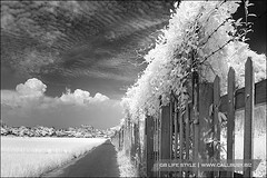 IRbarrier01 (callbusybiz) Tags: bw ir frozen time sony filter infrared barrier f828     093 nd8