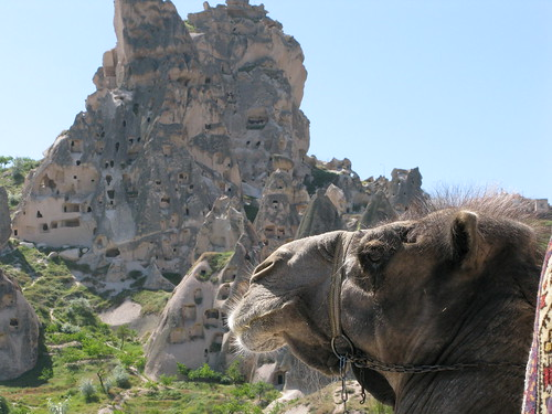 Uchisar Camel - Cappadocia, Turkey, on Flickr