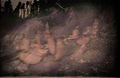 41 (ElfRedRedelf) Tags: film manipulated scanned efke ir820