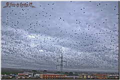 Free as a Bird (krisdecurtis) Tags: sky italy panorama bird nature birds animals clouds canon spectacular landscape interestingness interesting italia nuvole 300d campania canon300d flock flight dream uccelli volo cielo kris birdsinflight 2009 paesaggio masterpiece mycity caserta stormo viewfrommyhouse marvels maddaloni meraviglie krisdecurtis