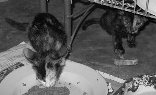 Day 37 bw cats.jpg
