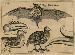 Bestiary Antiquated Zoology Gottorp KunstkammerGottorp Kunstkammer Bat and Birds (griffinlb) Tags: monster myth medival bestiary mythical peacay biblioodyssey