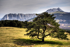 The lonely tree (basajauntxo) Tags: mountain tree landscape arbol paisaje lonely montaa pino bizkaia solitario gmt saibi urkiola anboto saibigain alluitz basajauntxo vosplusbellesphotos artofimages bestcapturesaoi mygearandme mygearandmepremium mygearandmebronze mygearandmesilver