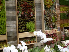 Vertical Garden (Jill Clardy) Tags: show flower vertical wall garden succulent san francisco orchids explore 100views 500views 2009 1000views 2000views explored wallgarden verticalgarden ©2009jillclardy