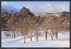 Fukushima Trees