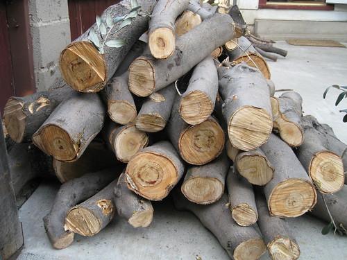 European olive log pile