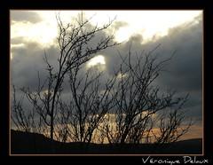 Etonnante leve de nuage sur le Larzac (Vronique Delaux On/Off) Tags: sunset sky france nature clouds plateau montpellier ciel iq nuages coucherdesoleil magicmoment millau larzac smrgsbord photographe aveyron photon potofgold midipyrnes inspiredbylove arbustes brunas kartpostal golddragon abigfave karpostal aplusphoto francelandscapes overtheexcellence panasonicfz18 grandscausses vosplusbellesphotos vroniquedelaux cratitudesnolimits vroniquedelaux delaux photographemontpellier