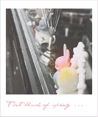 365/97: HPPT!! (jane.garratt) Tags: postprocessed bunny text australia adelaide cbd southaustralia picnik selectivecolour fauxlaroid antiquemarket grotestreet canoneos450d colourpink hppt canonefs55250mmf456is prettypinktuesday 365oneyearon prettypinkisms rememberingtoby