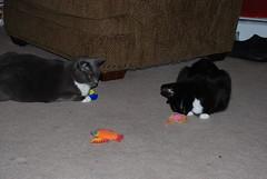 The kitties on their birthday