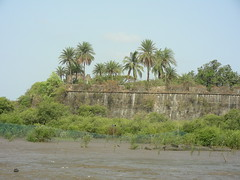 Fort from creek side (Vinay Bavdekar) Tags: india trek landscape ruins maharashtra forts vasai coolpixs4 seaforts westernindia vasaifort portugueseforts