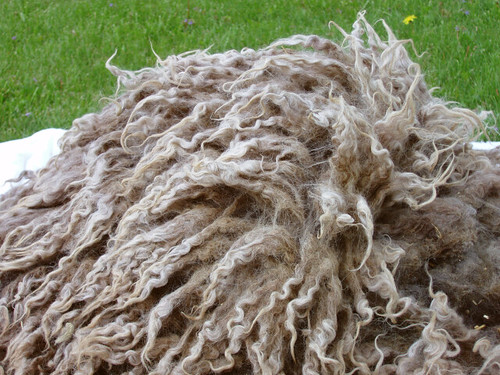 icelandic fleece