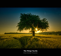 The things you do (George Goodnight) Tags: blue sky sun tree field barley sunrise germany deutschland nikon feld himmel explore blau frontpage sonnenaufgang baum hdr gerste zakkwylde idream thethingsyoudo infinestyle nikond300 nasttten aboveandbeyondlevel1