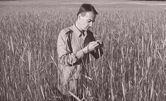 Népünk Nagy Vezére, II. Ernest a Csömöri Vörös Traktor Tsz-ben tett látogatásakor megállapitja, hogy az idei búza- és rozstermésünk átlaga 9,2 százalékkal lesz nagyobb a tavalyinál. (Pozor Vlak) Tags: portrait blackandwhite bw field dave fifties propaganda parody rákosimátyás