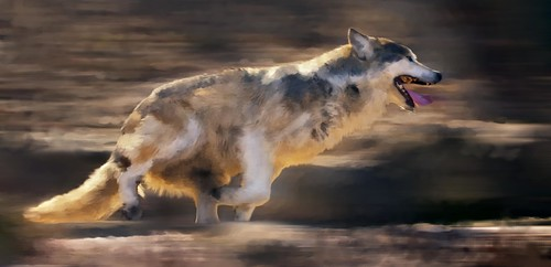 Running wolf-painting by garreyf