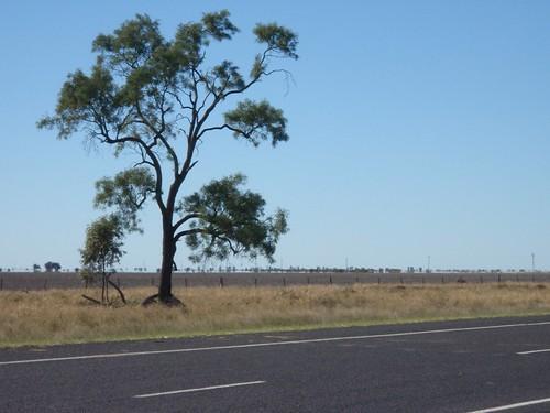 Gran árbol junto a la carretera