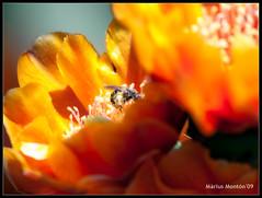 Primavera (wizlymm) Tags: flowers orange flores flower primavera reflex spring flor olympus naranja orton taronja flors e510 zd uro 70300mmed