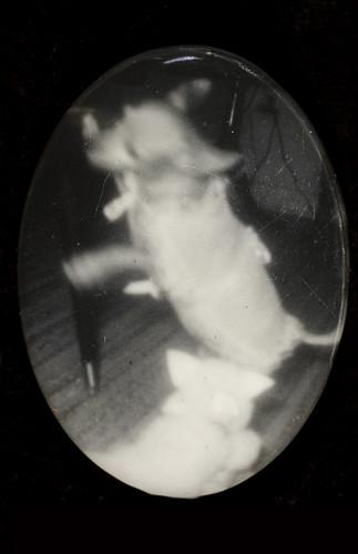 Cat chasing dog par George Eastman House