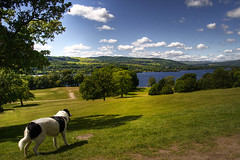 Loch Lomond (BoboftheGlen) Tags: dog castle scotland loch lomond balloch