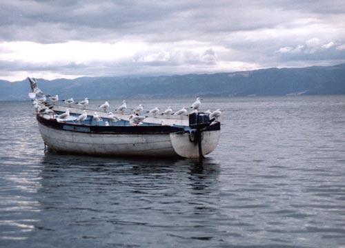 Barco com gaivotas no Lago Ohrid
