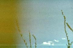 Kodachrome_249 (nefotografas) Tags: film price for switzerland iso200 free slide kodachrome process expired developed lithuania parkas included k14 zenite neries regioninis 031990