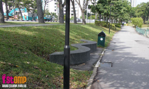 Trees along Tampines park connector are safety hazards in disguise