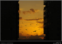 Vuelos a contraluz (MONCHO REY) Tags: sunset seagulls backlight contraluz atardecer fly gaivotas pentax flight galicia lugo gaviotas foz vuelo solpor volar naturesfinest anotherday naturefinest k20d otroda astorres monchorey monarq78