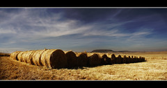 Looking for the Needle (Africa Dave) Tags: blue sky cloud detail photo amazing farm group stack roll hay bale hayrolls haybales lineup the 100commentgroup artofimages bestcapturesaoi thebestofcengizsqueezeme2groups