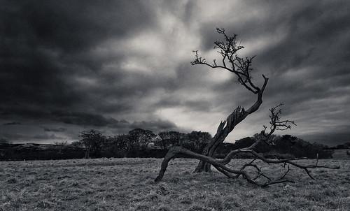 IRELAND-DUBLIN-PHOENIX PARK-THE DEATH TREE