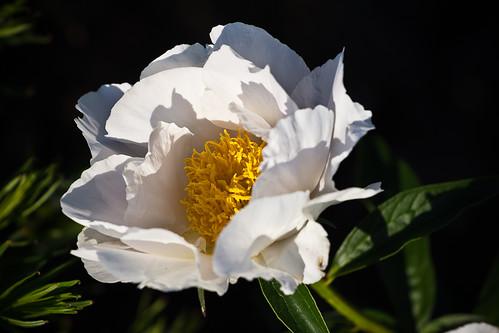 110430 Flower