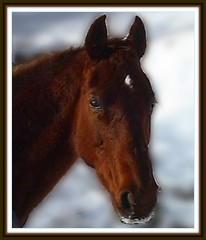 ROCKIN' HORSE CORRAL