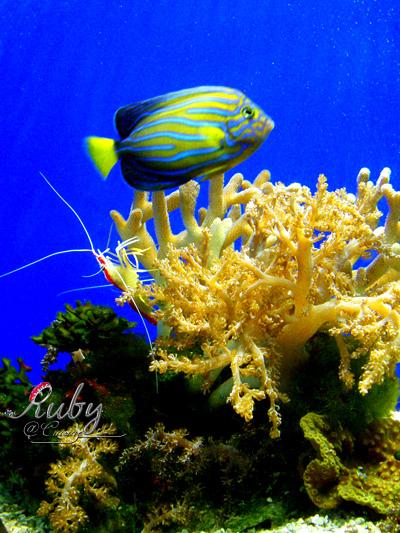 Monaco_aquarium_coral
