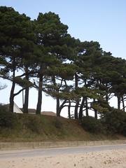 Trees in Mudeford (crwilliams) Tags: beach dorset mudeford date:month=march date:day=14 date:year=2009 date:hour=14 date:wday=saturday