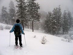 Snowshoeing Near Lake Chelan (Mike Dole) Tags: winter snowshoe cascades snowshoeing washingtonstate lakechelan