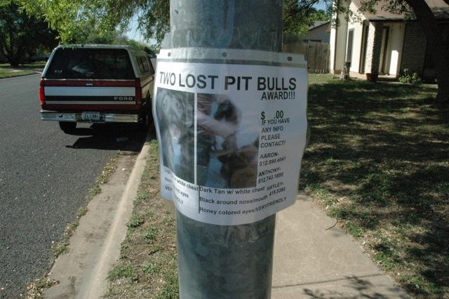 two lost pitt bulls