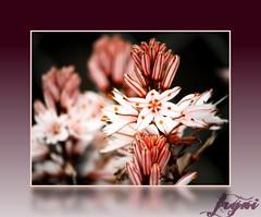 flower (TREE-FAIRY) Tags: 1001nights awesomeblossom kartpostal masterphotos