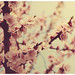 Primavera ~ by ~bumblebee(mirella)~