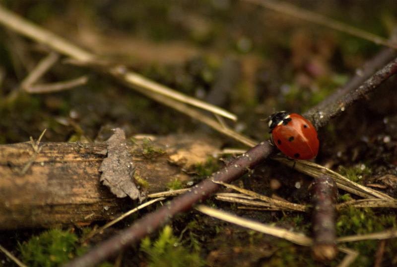 Ladybug is climbing