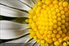 Flor-120409150458