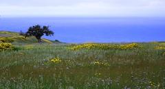 albero (eufrapi (il mio acronimo)) Tags: italy verde italia mare campagna sicily fiori palermo albero sicilia prati imera travelsofhomerodyssey