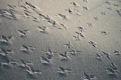 Tippy toe (Nedieth) Tags: travel light beach denmark sand footprints hirtshals birdtracks