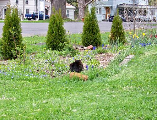 Fuzzy in Garden 2