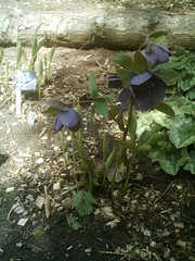 IMAG0006 (Ian Faz) Tags: flowers plants tress nessgardens