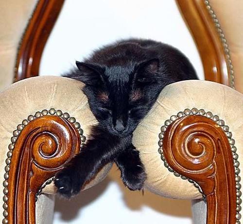 cat_06